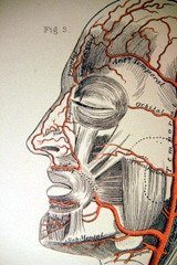 sinusitis can be alleviated with acupuncture