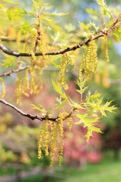 acupuncture helps seasonal allergies